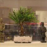 Copac in miniatura pentru interior