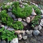 Ronduri circulare cu pietre si plante mici