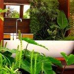 Baie tropicala cu plante ornamentale