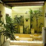 Baie feng shui cu plante decorative