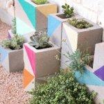 Plante suculente in boltari colorati
