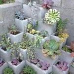 Plante suculente in ghivece din boltari