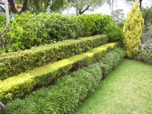 Gard viu - O minune verde 5